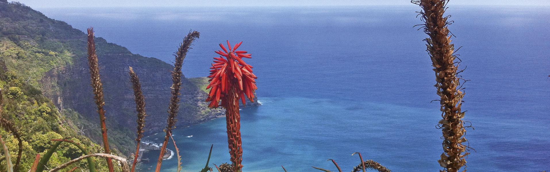 Banner-Madeira